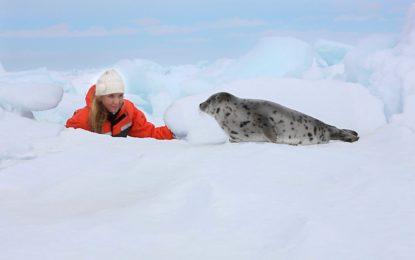 Verbot von Robbenprodukten auch in der Schweiz. Endlich!