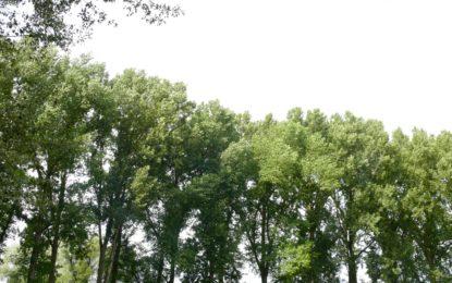 Erhalt der Bäume
