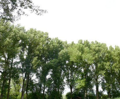 Protection des arbres