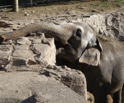 Elefantes en zoológicos