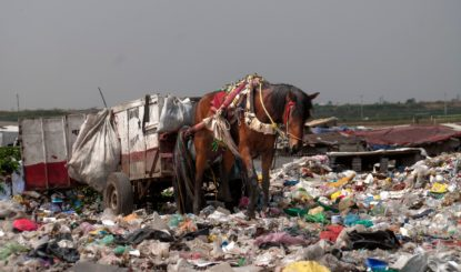 Rubbish-collection Horses