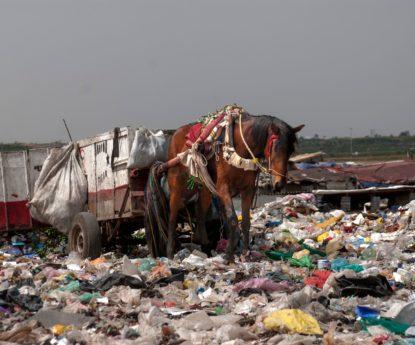 Recogida de basura con caballos