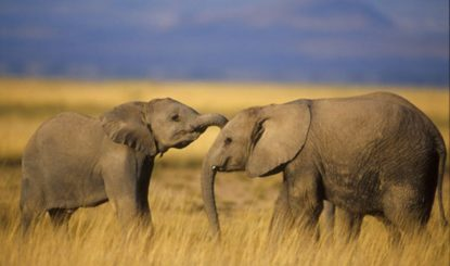 Emotionale Voten zum Handel mit bedrohten Tieren
