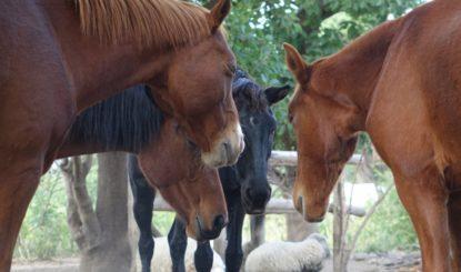 Pour la Fondation Franz Weber, chaque jour est la journée mondiale des animaux