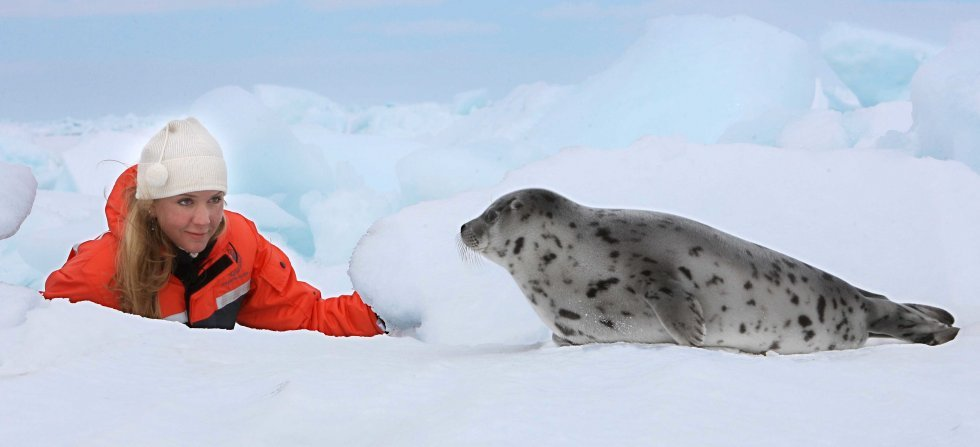 Ban on Seal Products in Switzerland