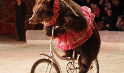 15.03.2018 – 70'000 Unterschriften gegen Wildtiere im Zirkus