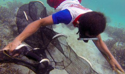 Haustiere aus dem Korallenriff?