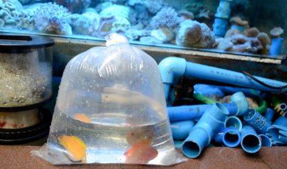 Communiqué aux médias : Le Conseil fédéral le confirme - la durabilité du commerce de poissons d'ornement ne peut pas être contrôlée à l'étranger