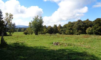 Windpark in Montagne-de-Buttes –Umweltorganisationen wehren sich für die Natur