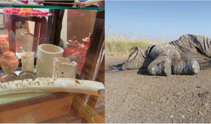 Communiqué aux médias: Le Botswana fait marche arrière sur la sur la protection des éléphants