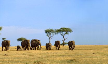 Sommet sur le commerce international d'espèces me-nacées – Comment sauver l'éléphant d'Afrique ?