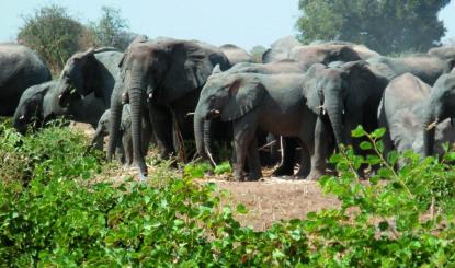 Medienmitteilung CITES: CoP18 vom 16. bis 28. August 2019 – Das Schicksal der Elefanten wird diesen Sommer in Genf entschieden