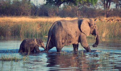 Bundesrat verschärft Sanktionen für illegalen Artenhandel - Ein Schritt in die richtige Richtung