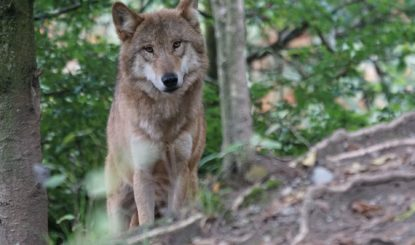 Was passiert in Bundesbern nach dem «Nein» zur Jagdgesetz-Revision?