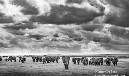Africa. Endangered. Photo exhibition with BOLDT and Fondation Franz Weber
