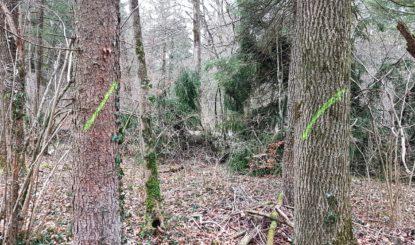 Erfolg im Kanderdelta: Ein Teil der Bäume bleibt stehen