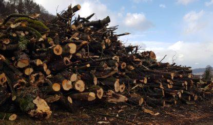 Sicherheitswahn lässt Bäume zittern
