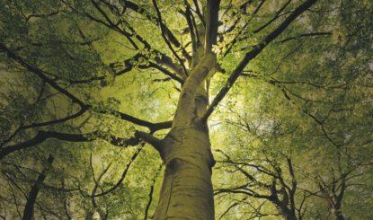 Comment la FFW lutte contre l'abattage des arbres