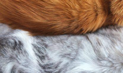 Revision der Pelzdeklarationsverordnung: aus Sicht des Tierschutzes absolut unzureichend