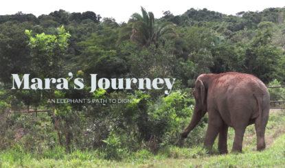 Mara`s journey