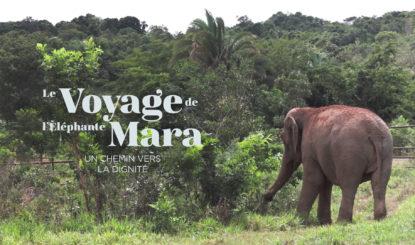 Le voyage de Mara vers la liberté
