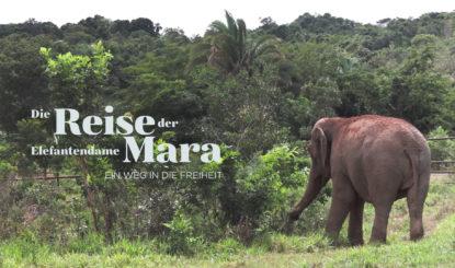 Maras Reise in die Freiheit