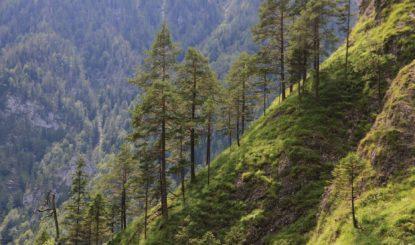 Notre forêt de protection a besoin des loups et des lynx