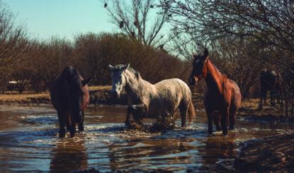 Equidad: ein Pferdeleben!