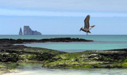 Die Galapagosinseln, die Pandemie und die Natur