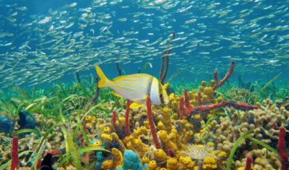Protéger les océans là où ils se trouvent: La campagne «Gran SeaFlower» est lanceé!
