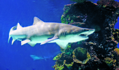 Geplantes Grossaquarium «Shark City» hatte seit Jahren Haie «auf Vorrat» gefangen