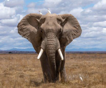 Protection des éléphants