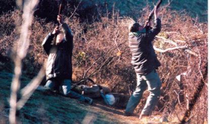 Keine Ringeltaubenmassaker in der Ardèche