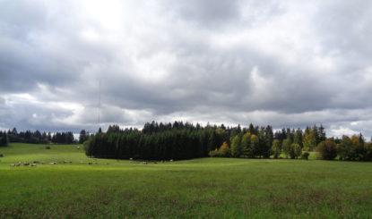 Windturbinen zerstören Landschaft und Vogelwelt