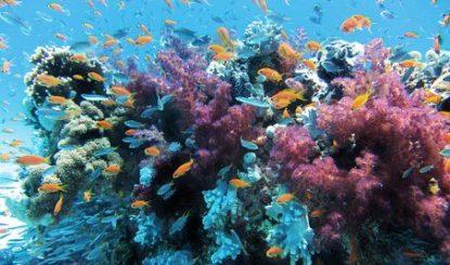 Sea Flower – La paix et la protection des océans