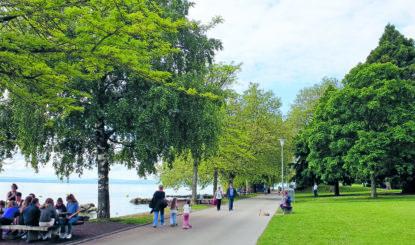 Abattage d'arbres à Neuchâtel