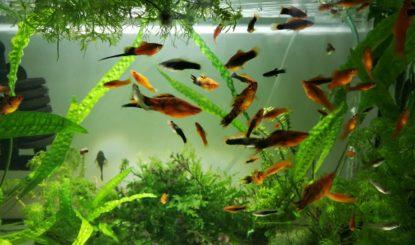 Nouvelle campagne d'information sur les poissons d'ornement - la souffrance animale dans les aquariums passe inaperçue !