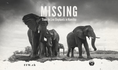 Media Release: CITES gives green light to export of Namibian elephants