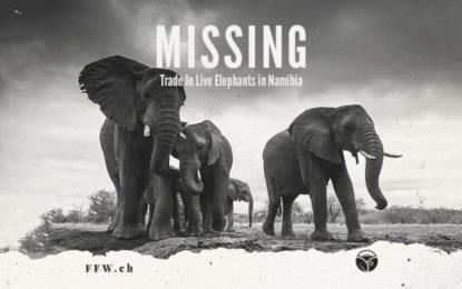 Medienmitteilung: Die CITES genehmigt den Export namibischer Elefanten
