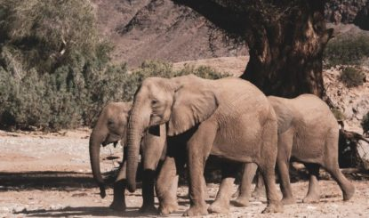Press release: EU Commission silent on live elephant exports from Namibia